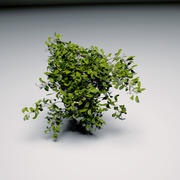 Buisson 3d model