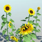 Sunflower (9 Items) 3d model