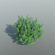 Lilac Tree (3 items) 3d model