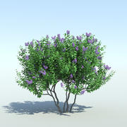 Lilac Tree (3 items) 3d model