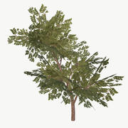 Bush Type 5 Low Poly 3d model