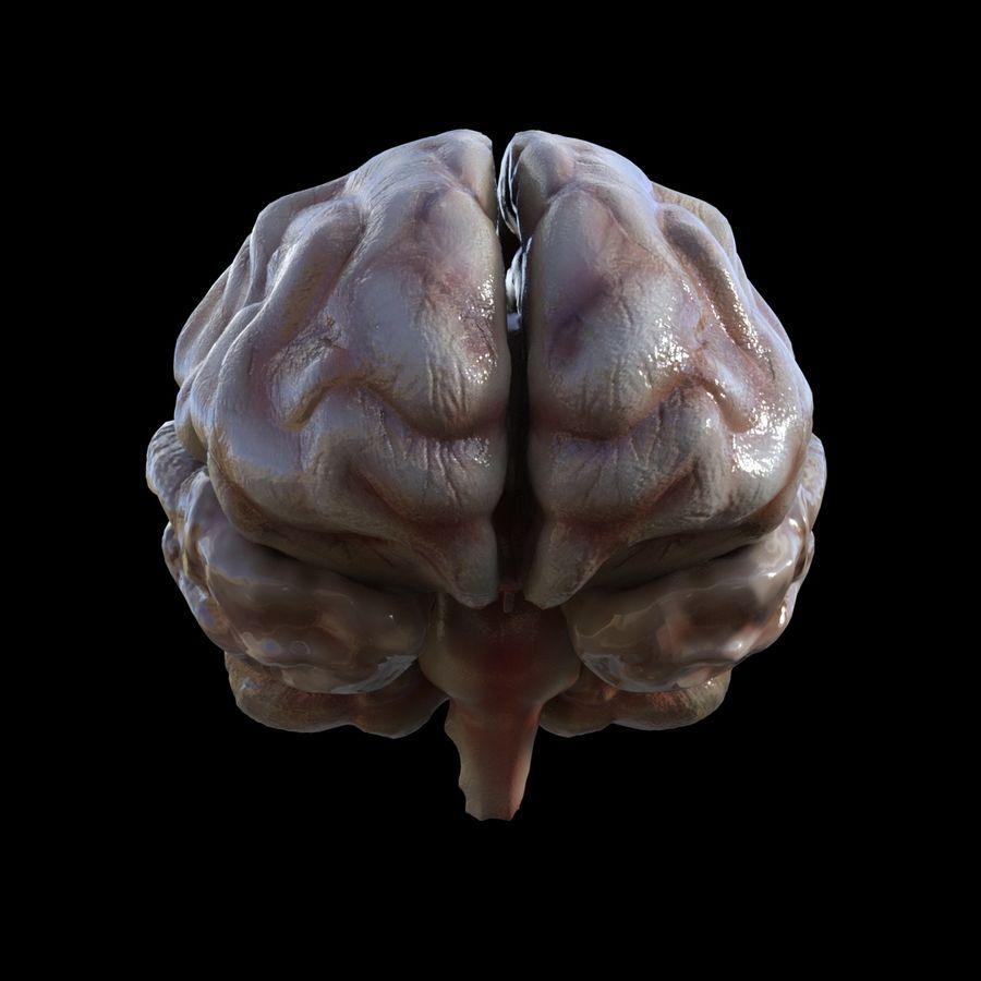 Hjärna royalty-free 3d model - Preview no. 1