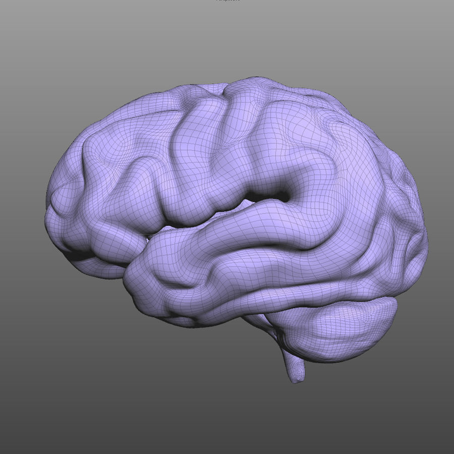 Hjärna royalty-free 3d model - Preview no. 8