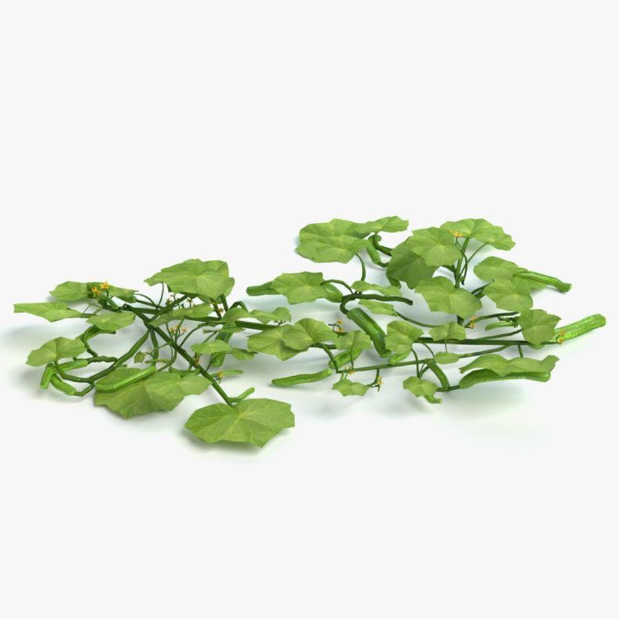 Plant de concombre royalty-free 3d model - Preview no. 1