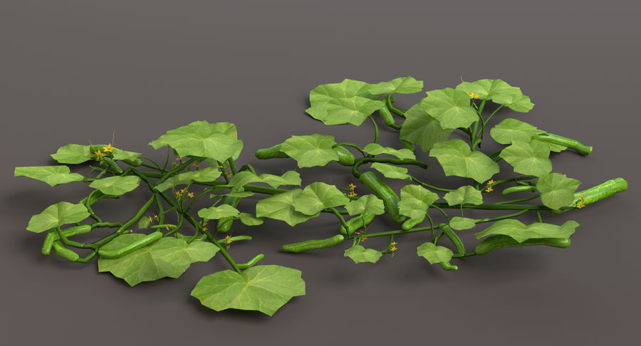 Plant de concombre royalty-free 3d model - Preview no. 3