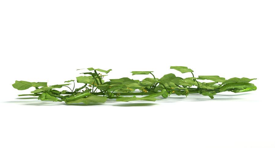 Plant de concombre royalty-free 3d model - Preview no. 6