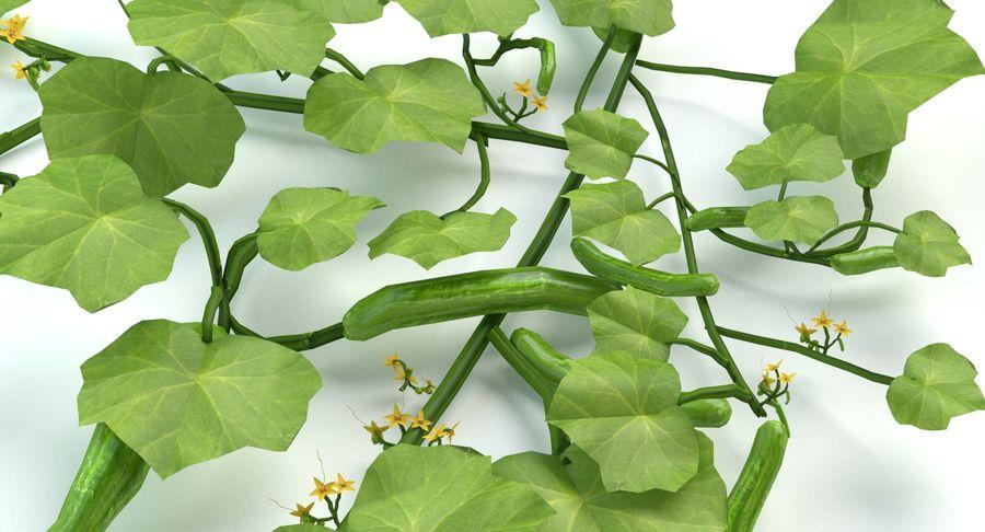 Plant de concombre royalty-free 3d model - Preview no. 8