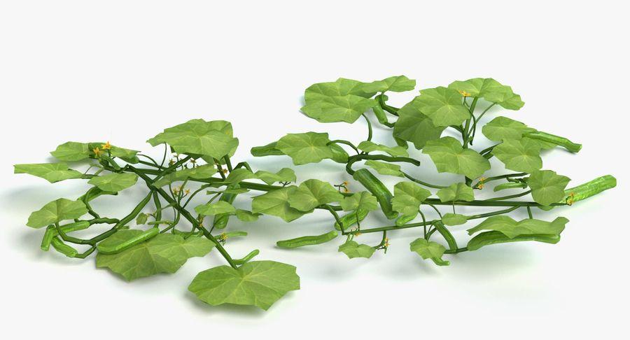 Plant de concombre royalty-free 3d model - Preview no. 2