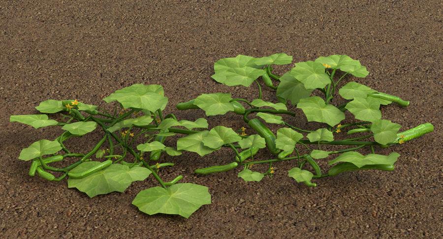 Plant de concombre royalty-free 3d model - Preview no. 4