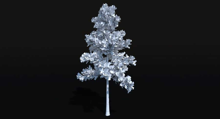 Conifer 1 royalty-free 3d model - Preview no. 8