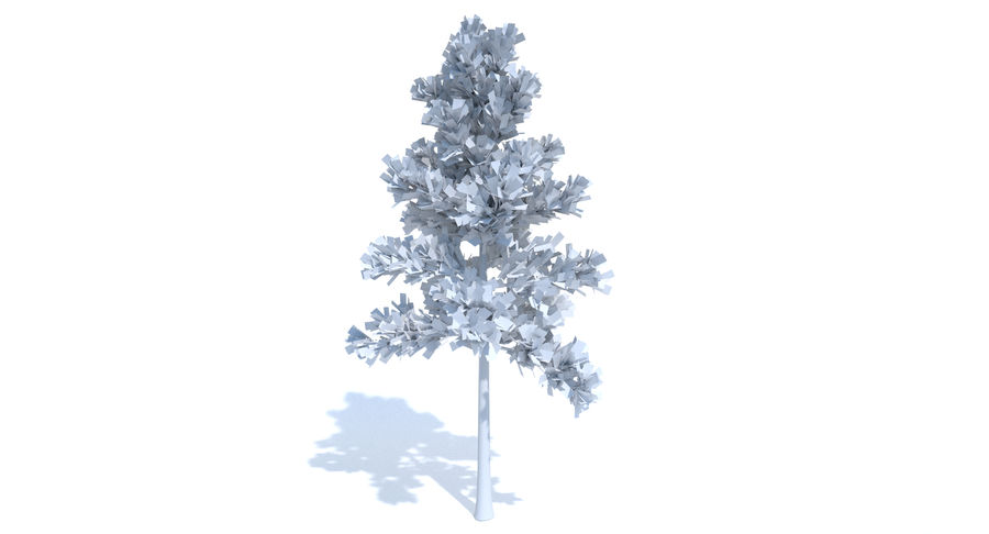 Conifer 1 royalty-free 3d model - Preview no. 7