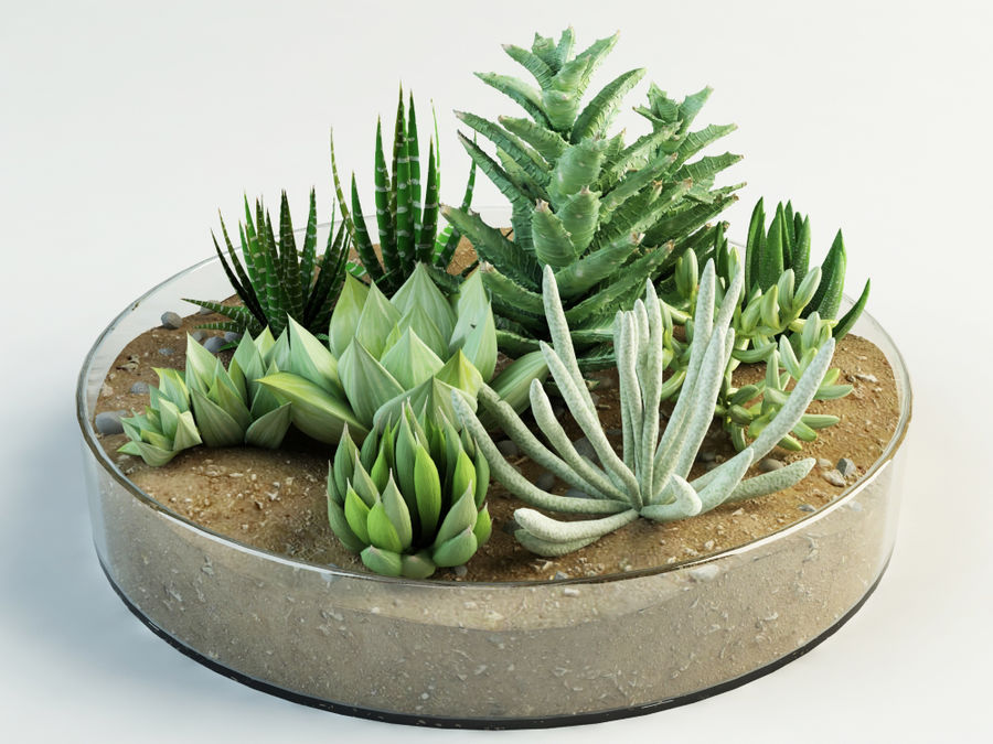 succulent composition plants cacti 3d model 23 max oth obj fbx free3d. Black Bedroom Furniture Sets. Home Design Ideas