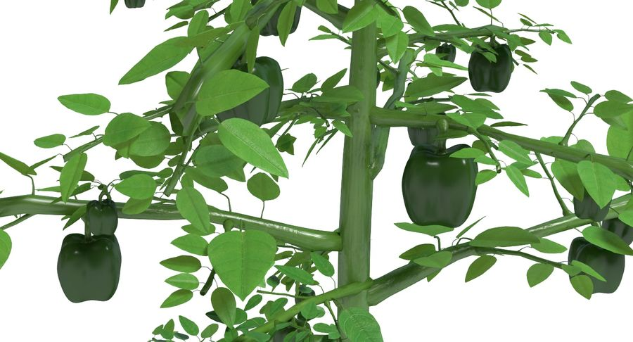 Bell Pepper Plant royalty-free 3d model - Preview no. 4