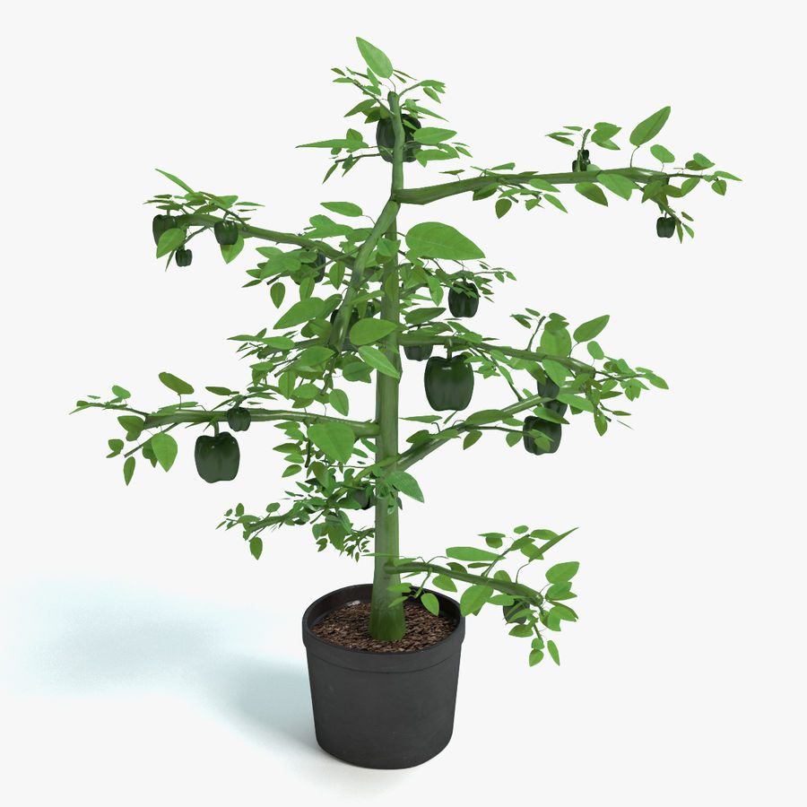 Bell Pepper Plant royalty-free 3d model - Preview no. 1