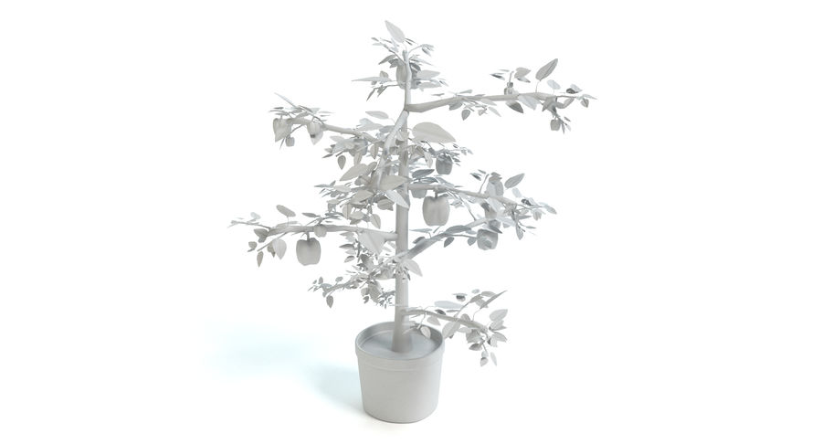 Bell Pepper Plant royalty-free 3d model - Preview no. 7