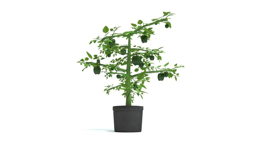 Bell Pepper Plant royalty-free 3d model - Preview no. 6