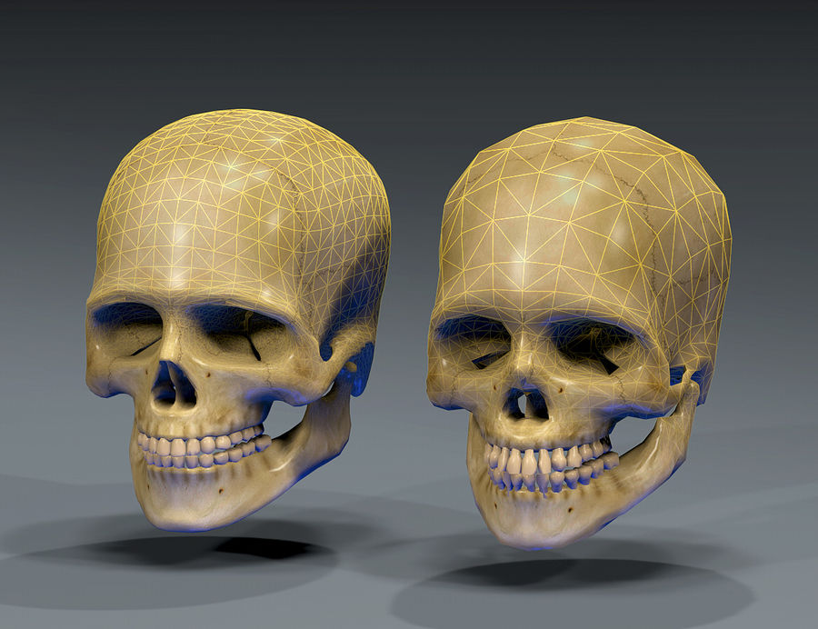 Skull Human Real Textured royalty-free 3d model - Preview no. 8