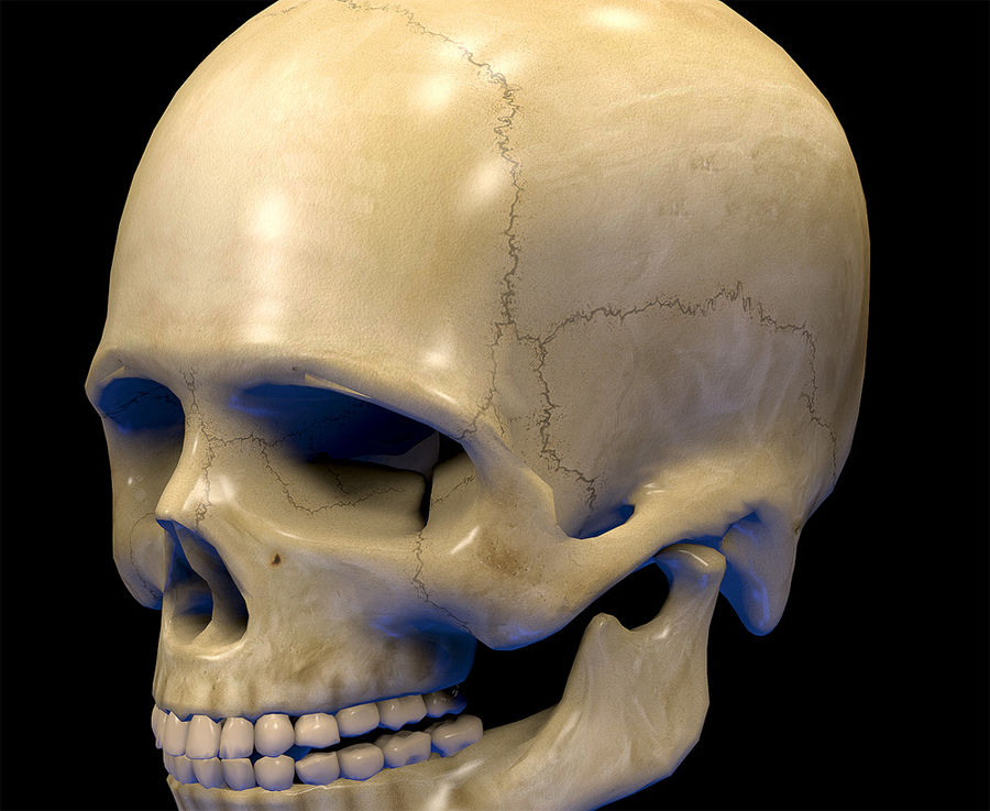 Skull Human Real Textured royalty-free 3d model - Preview no. 4