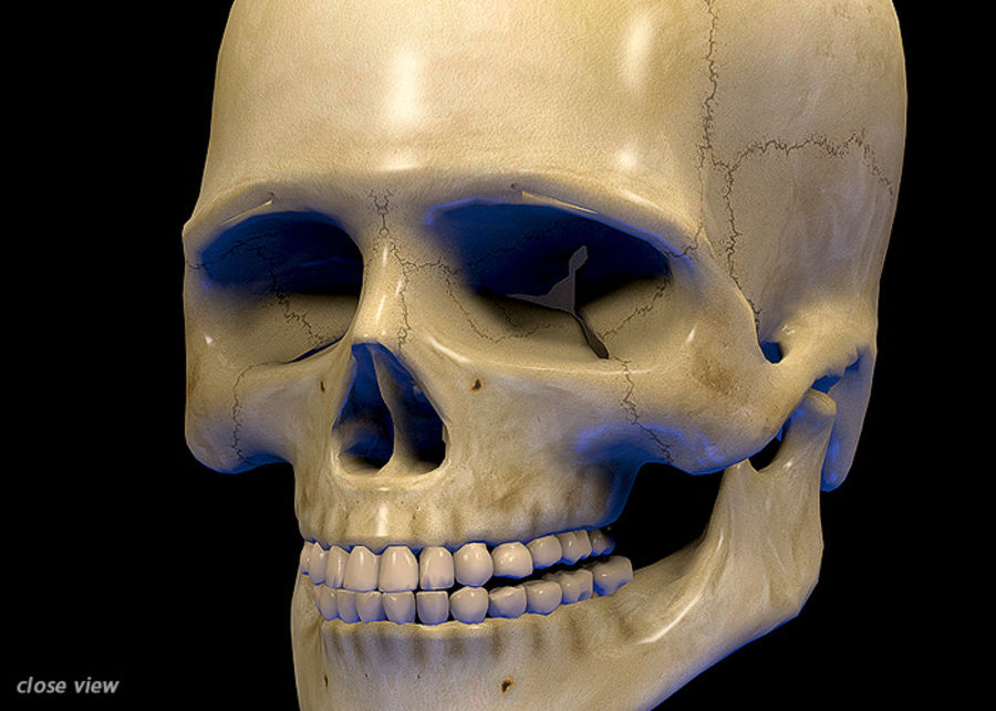 Skull Human Real Textured royalty-free 3d model - Preview no. 5