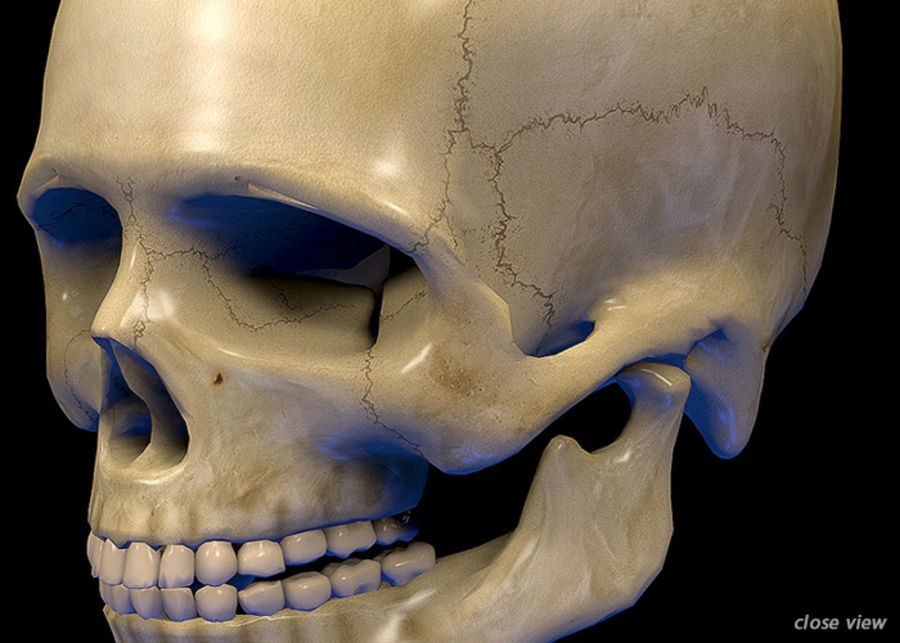 Skull Human Real Textured royalty-free 3d model - Preview no. 3
