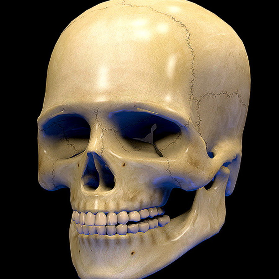 Skull Human Real Textured royalty-free 3d model - Preview no. 1