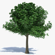 Medium Size Tree 3d model