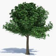 Baum mittlerer Größe 3d model
