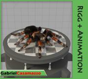 Tarantel 3d model