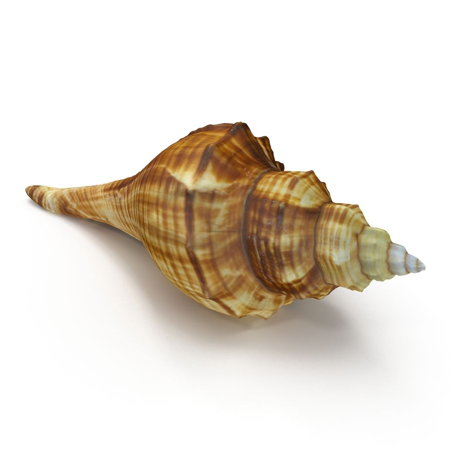 Sea Shell 05 royalty-free 3d model - Preview no. 4
