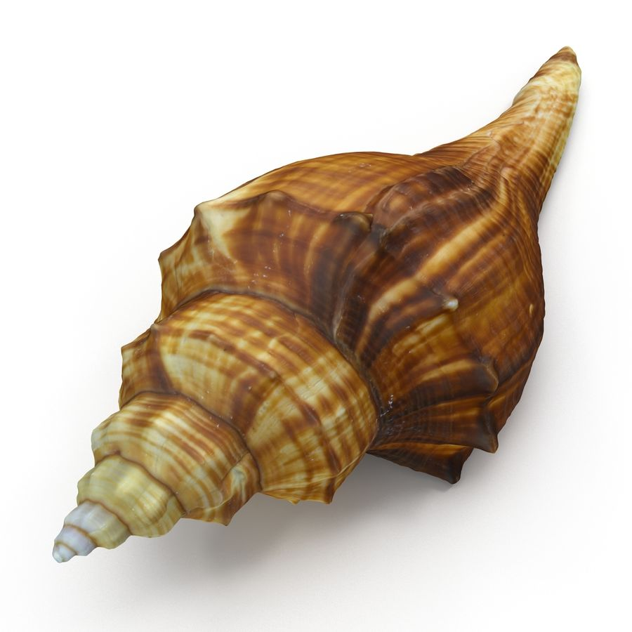 Sea Shell 05 royalty-free 3d model - Preview no. 5