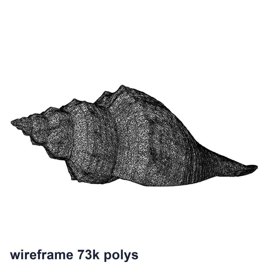 Sea Shell 05 royalty-free 3d model - Preview no. 20