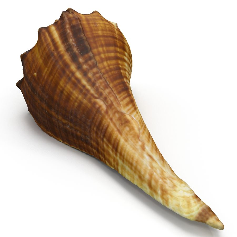 Sea Shell 05 royalty-free 3d model - Preview no. 7