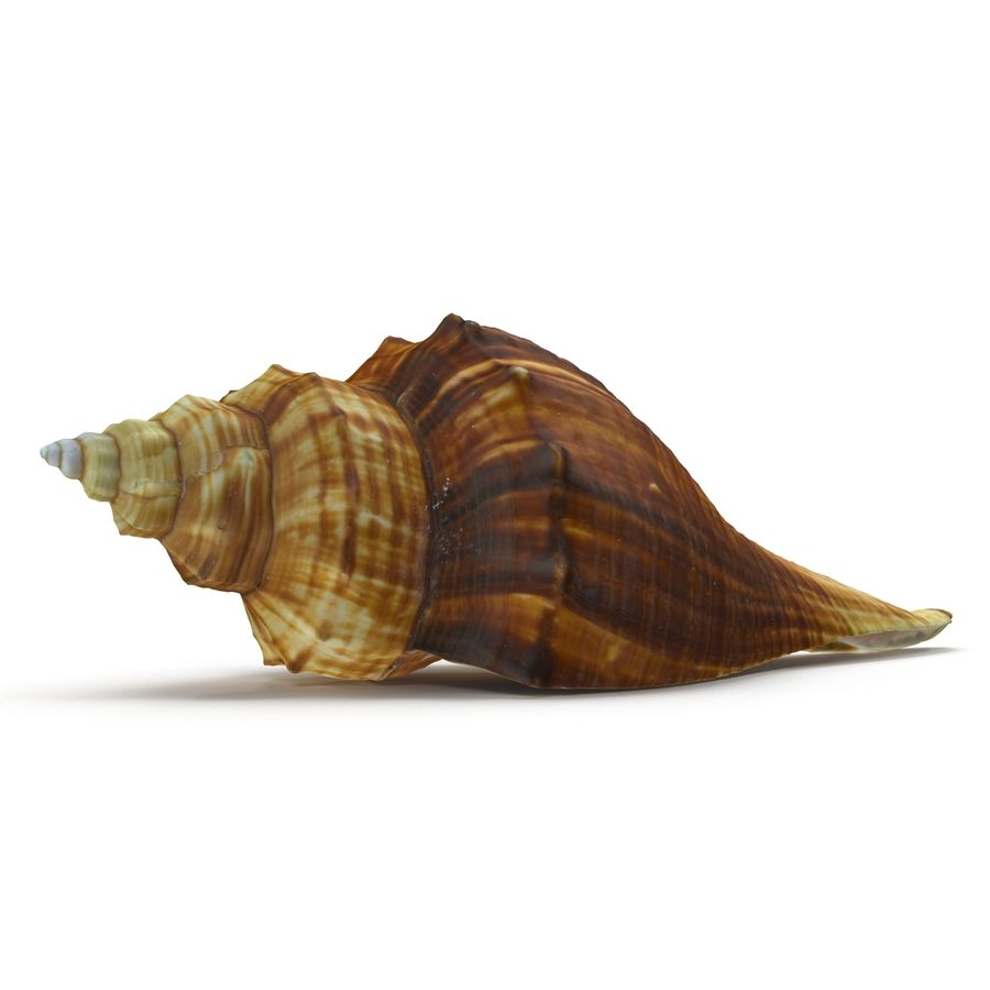 Sea Shell 05 royalty-free 3d model - Preview no. 2