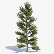 Low Poly Pine Tree 2 3d model