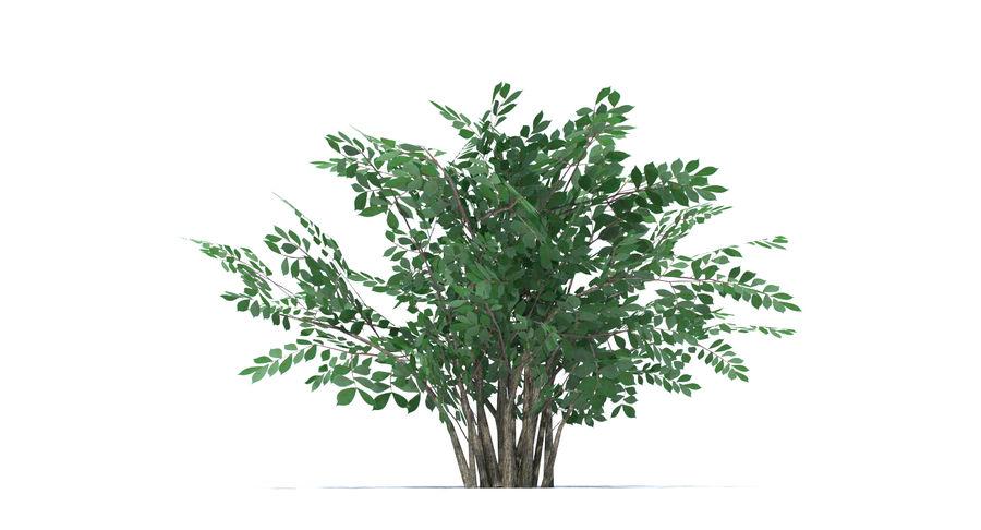 Low Poly Bush royalty-free 3d model - Preview no. 9