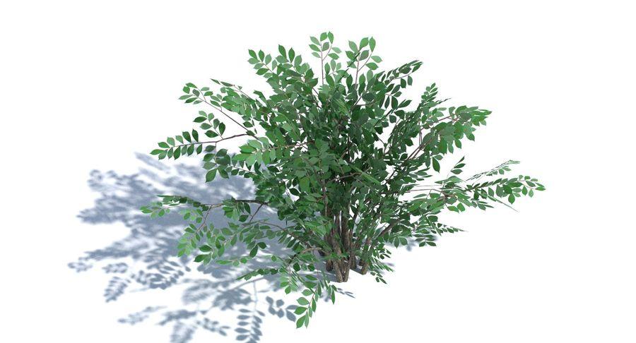 Low Poly Bush royalty-free 3d model - Preview no. 8
