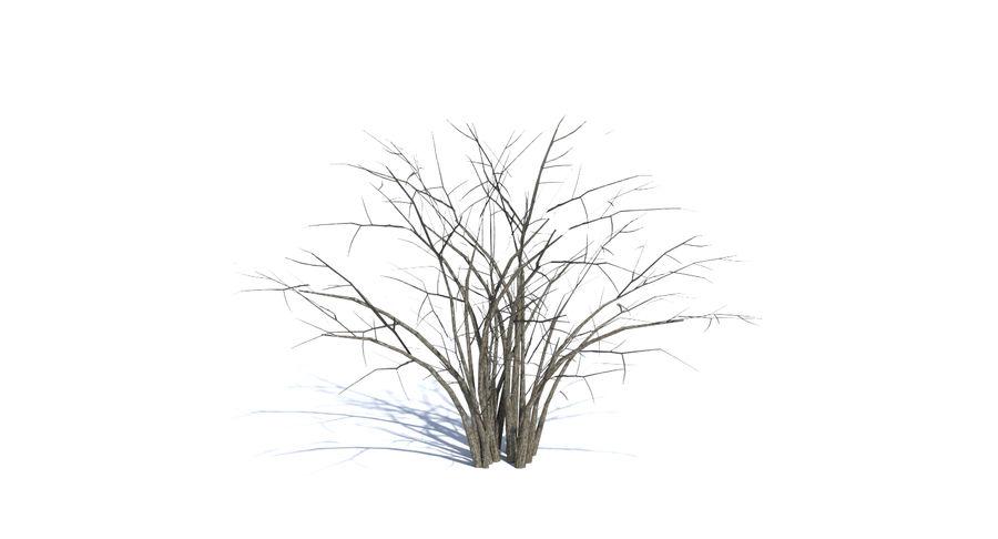 Low Poly Bush royalty-free 3d model - Preview no. 7