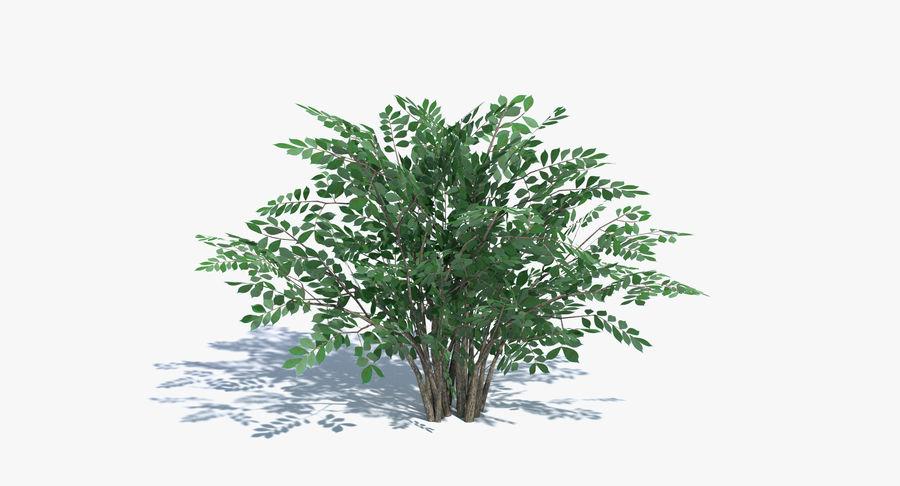 Low Poly Bush royalty-free 3d model - Preview no. 2