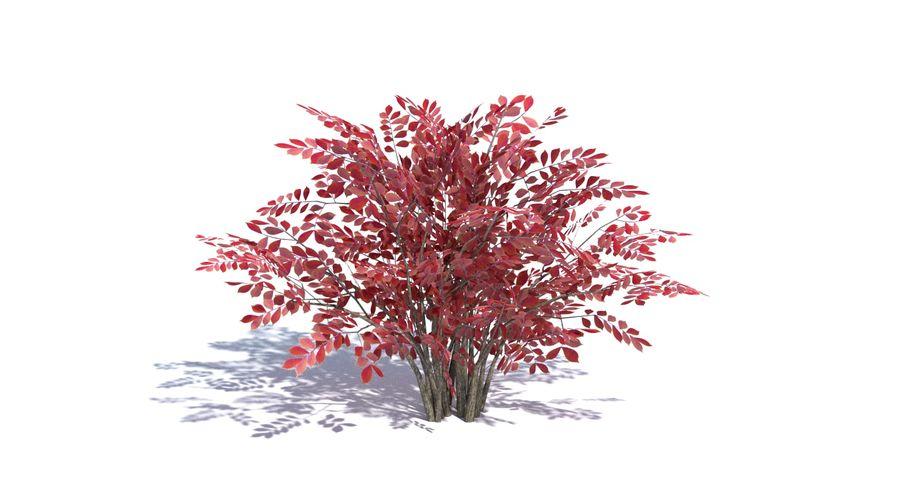 Low Poly Bush royalty-free 3d model - Preview no. 6