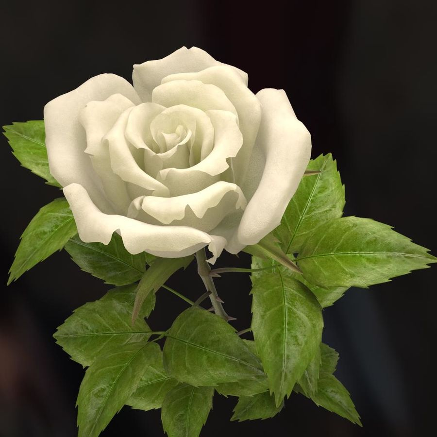 rose white royalty-free 3d model - Preview no. 6