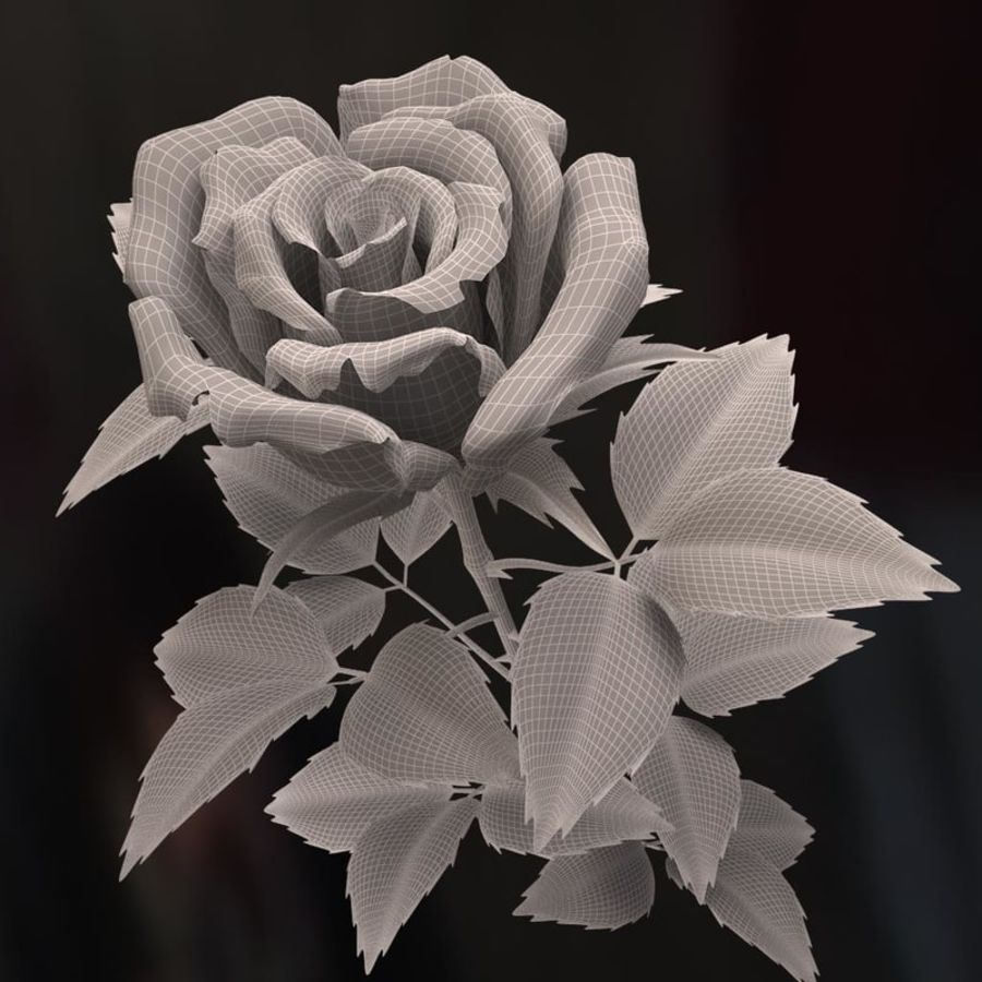 rose white royalty-free 3d model - Preview no. 14