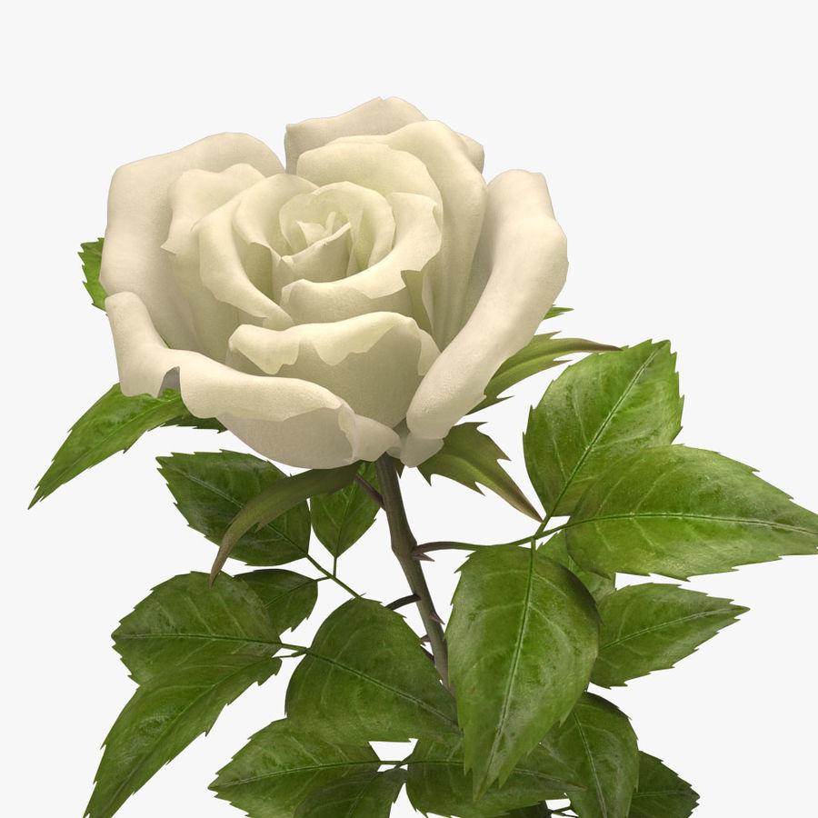 rose white royalty-free 3d model - Preview no. 9