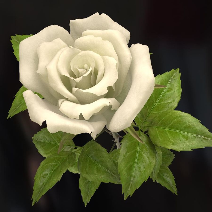 rose white royalty-free 3d model - Preview no. 8