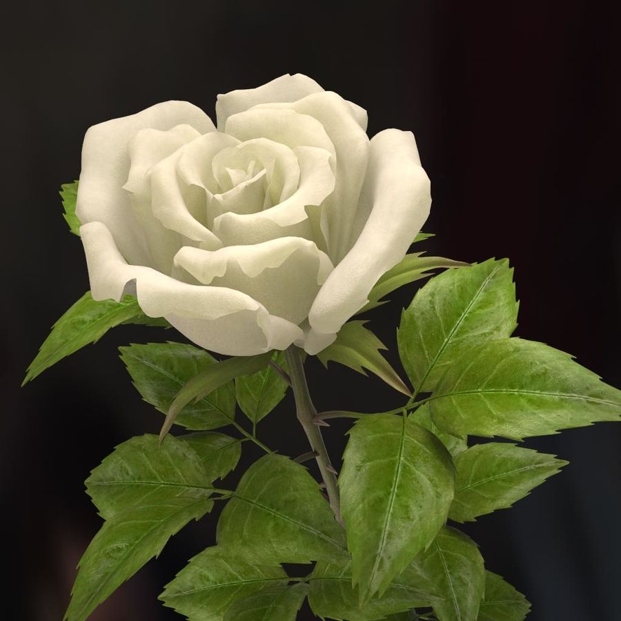 rose white royalty-free 3d model - Preview no. 10