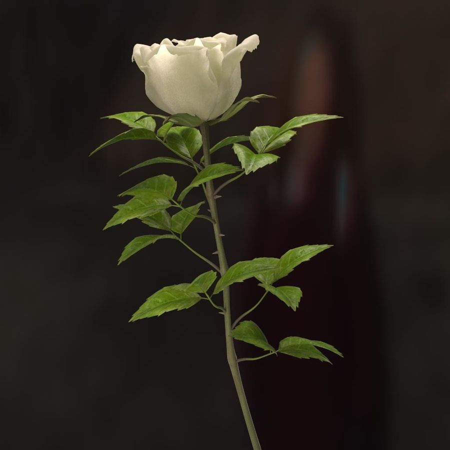 rose white royalty-free 3d model - Preview no. 12