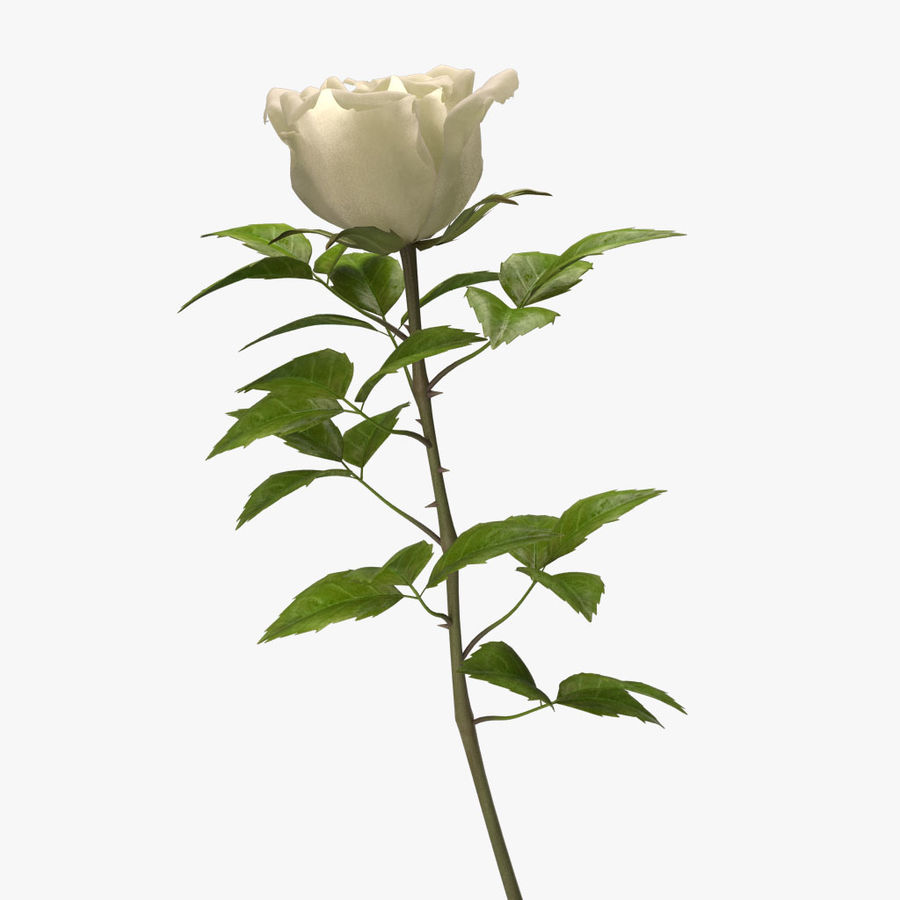 rose white royalty-free 3d model - Preview no. 11