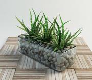 haworthia succulent set in vase 3d model