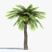 Låg Poly Palm Tree 3d model