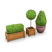 Saksı Bitkileri Paketi 4 3d model