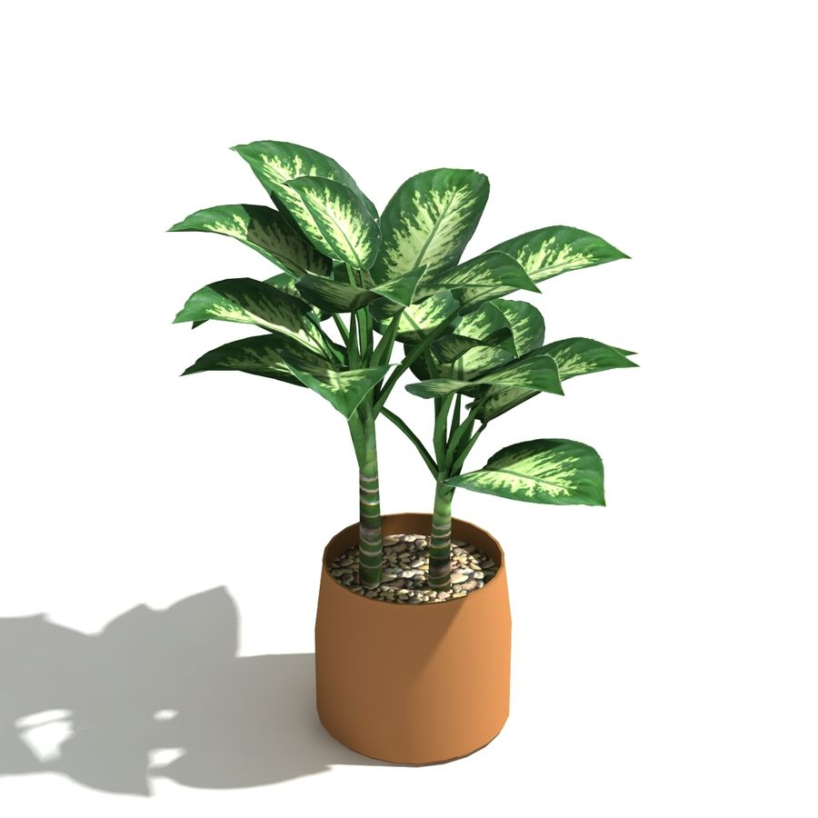 Dumb Cane low poly indoor plant 3D Model $7 -  unknown  max  skp
